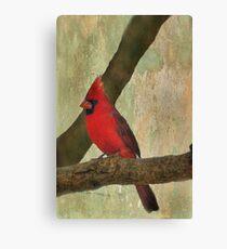 Male Cardinal Canvas Print