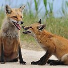 Red Fox and Kit by angelcher