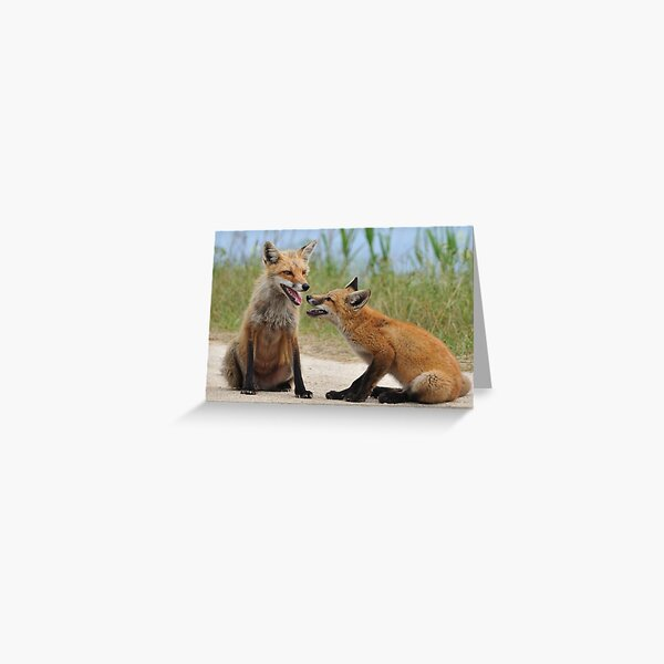 Red Fox and Kit Greeting Card