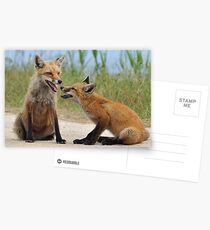 Red Fox and Kit Postcards