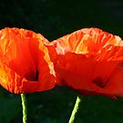 2 Poppies by Mike HobsoN