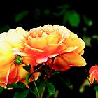 Fiery Orange Rose by Beth Brightman