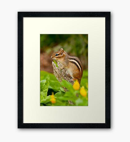 Chipmunk on Log Framed Print