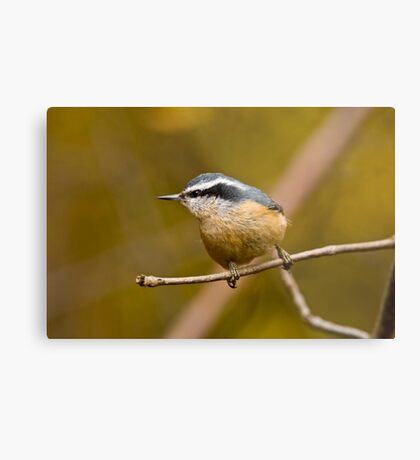 Red Breasted Nuthatch - Ottawa, Ontario Metal Print