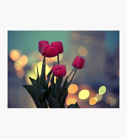 Tulips in twilight Photographic Print