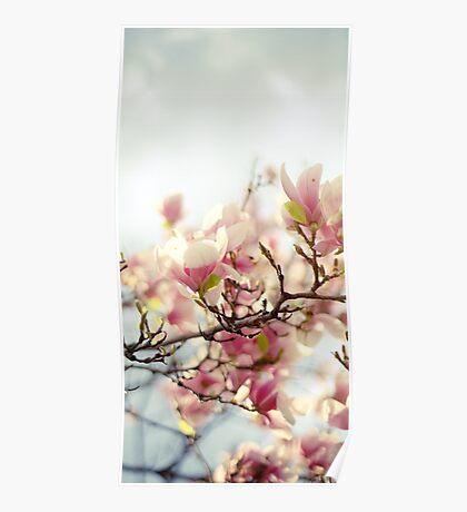 Evening Magnolia Poster