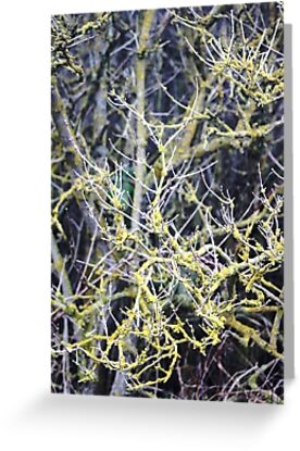 Scrubland botanical by chihuahuashower