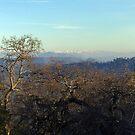Sierra by Allan  Erickson