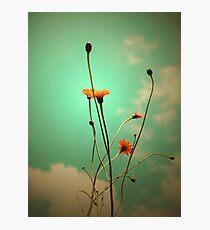 Vintage Weeds Photographic Print