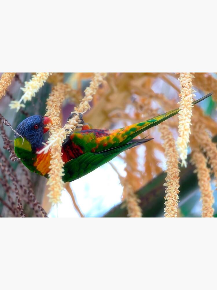 Rainbow lorikeet by fardad