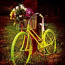 Bicycle  by Milena Ilieva