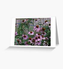 My Purple Coneflowers Greeting Card