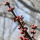 Spring's Awakening by Sviatlana