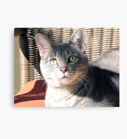 Hi, My Name is Festus Canvas Print