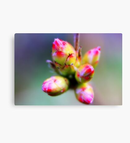 Budding Out Canvas Print