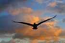 Pelican silhouette, Havana, Cuba by David Carton