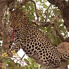 WANT TO JOIN IN BREAKFAST - THE LEOPARD - Panthera pardus – Luiperd by Magriet Meintjes