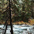 Hiking Sahalie Falls  by Eoxe