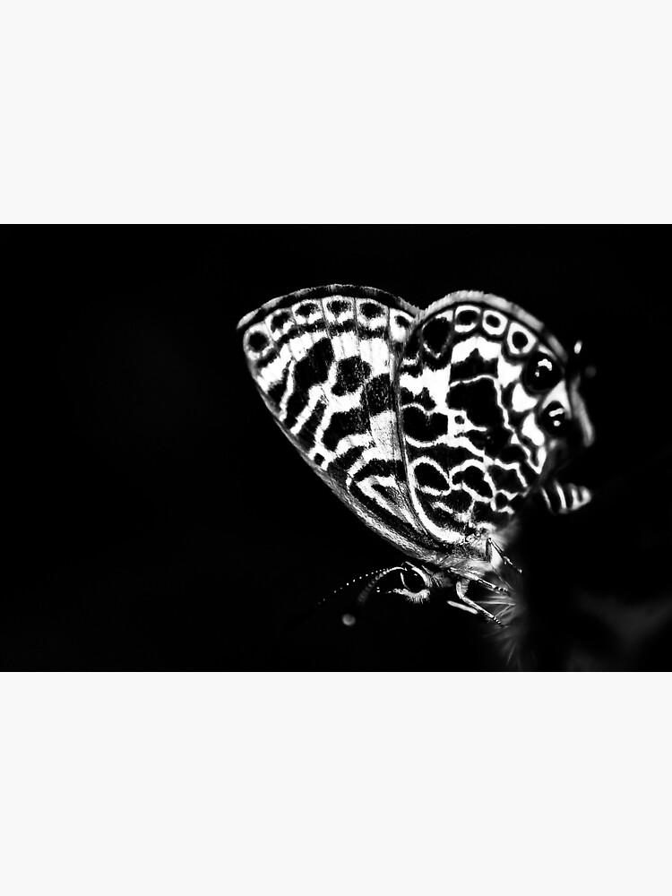Black butterfly by fardad