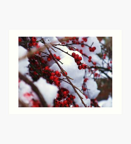 Red Berries Covered in Snow Art Print