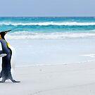 Lone Penguin by Ben Goode