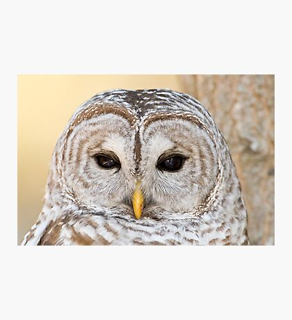 What a Hoot Photographic Print