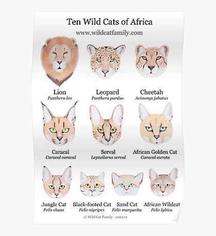 Ten Wild Cats of Africa Chart Poster