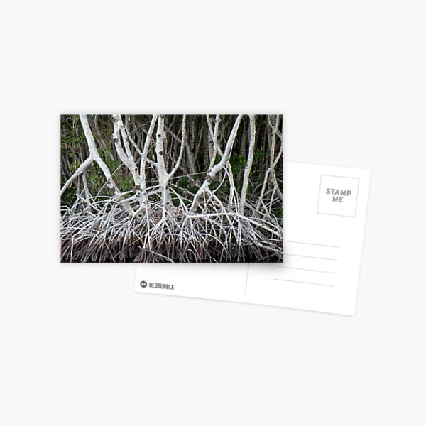 Mangrove Roots Postcard