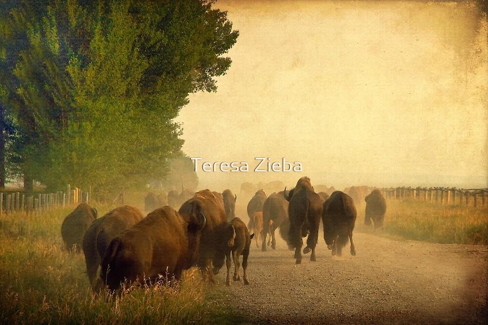 Stampede by Teresa Zieba