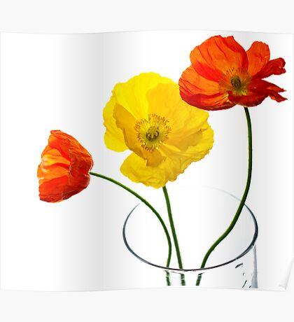 Spring Pop Poster