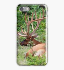Elk in Jasper National Park iPhone Case/Skin
