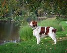 Bella At The Lake by Helen Green