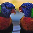 Partners - Rainbow Lorikeets, Sydney  by Philip Johnson