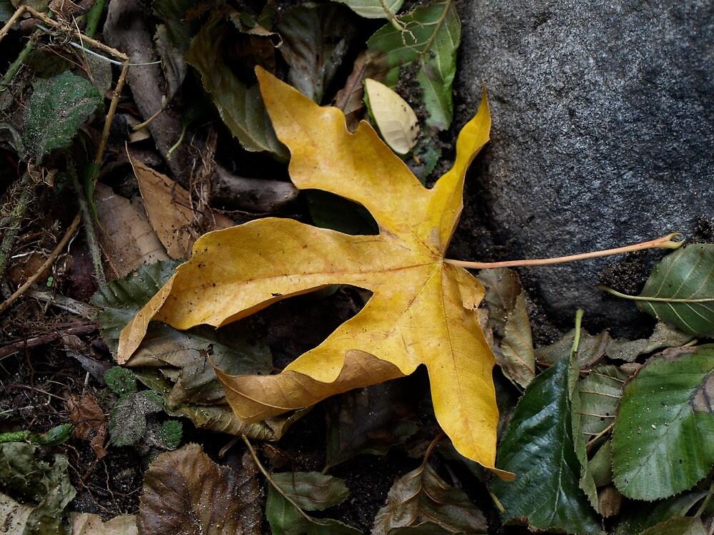 Autumn by MichaelBr