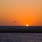 Seagull Sunset by Felicity Hayward