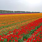 Colors of Spring 5 by Adri  Padmos