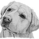 Labrador retriever - yellow G by doggyshop