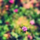 Little pink flower by Silvia Ganora