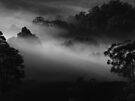 "'Deep Mist"" by debsphotos"