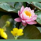 lotus-delight by LisaBeth