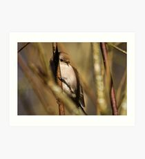 A Tiny Bird Amidst the Branches Art Print