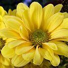 Sunshine by Lynne Morris