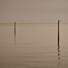 Solitude by Paul Thompson