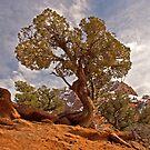 Tree of Light by Robert C Richmond