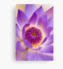 Shining Thru - purple waterlilly Canvas Print