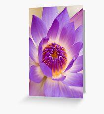Shining Thru - purple waterlilly Greeting Card