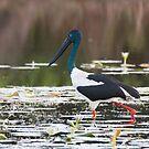 Pond Wanders by byronbackyard