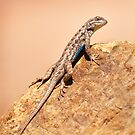 Spiny Lizard by Kim Barton