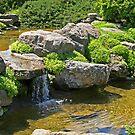 Garden Pond 2 by ECH52
