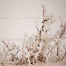 Frozen Weeds by aljen01